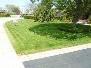 GRASS CUTTING  $25.00 & UP