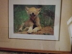 "***Baby Wolf Art"" framed professionally with glass...$22 each.."
