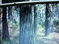 need-woodland-for-stumpeges-and-purchess-mature-woodland