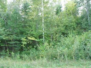 Terre à bois de 125 acres Gatineau Ottawa / Gatineau Area image 3