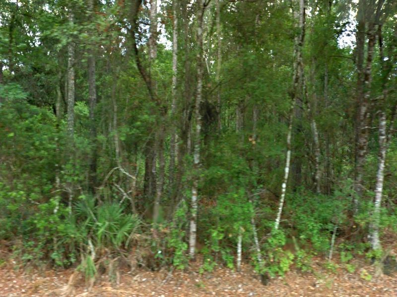PRE-FORECLOSURE FLORIDA TAX LIEN CERTIFICATE FOR LAND 1.14 ACRES BUNNELL, FL - $26.00