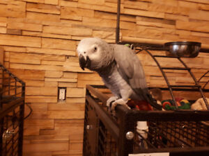 Wanted dna text male African grey