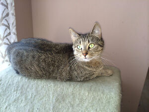 4 Yr Old Female Cat Free to GOOD Home