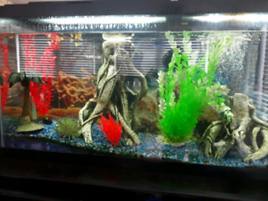 55 gallon tank with stand and accessories