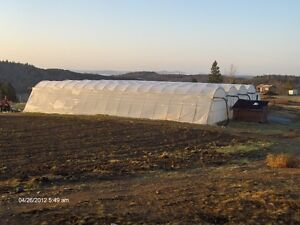 Large Commercial Greenhouse 84 x 100