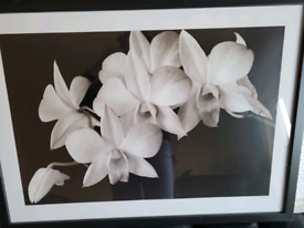 Large framed print, orchids, black and white