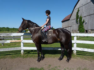 Beautiful 17.1hh Draft X Mare Kawartha Lakes Peterborough Area image 1