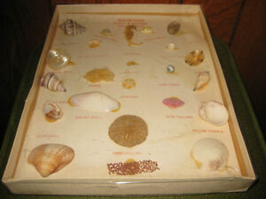 COLLECTION GEMS SHELL & MARINE COQUILLAGES - BOÎTE ORIGINALE