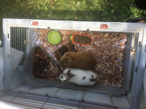 2 Male Rabbits for Sale Come With Cage , food and bedding