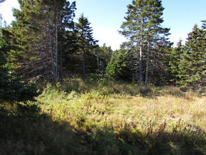 332-334 CONCEPTION BAY HIGHWAY, AVONDALE..1 ACRE