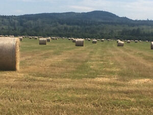 New hay being baled soon big square bales or round bales.