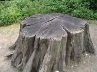 Affordable Stump Removal Service