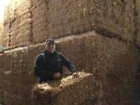 Straw - small square bales in bundles of 21
