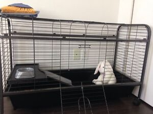 Small animal/ bunny cage