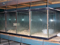 Fish Tanks with screen lids