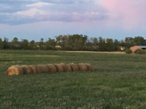 Round Bales for Sale