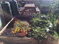 Soil/compost