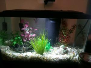 Aquarium 10 gallons avec accessoires et poissons