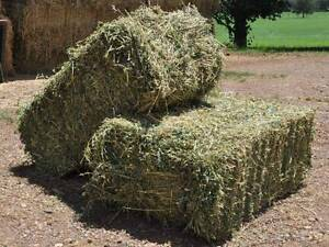 Lucerne small square hay bales Moss Vale, Soft, green, leafy Moss Vale Bowral Area Preview
