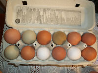 Hatching Eggs For Sale