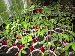 GARDEN PLANTS FOR SALE