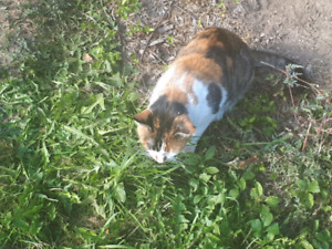 Found cat in park by centre street and hinchley in brampton