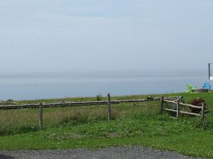 …4 EASY STREET, ISLINGTON..OCEAN VIEWS - COTTAGE COUNTRY St. John's Newfoundland image 13