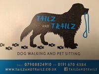 Dog walking/ Pet sitting