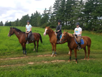 Fall Horse Riding Lessons