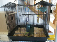 proven lineolated parakeets comes with: