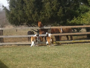 Dog Boarding and Dog Daycare Available