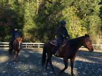 Horse Back Riding Lessons (Western & English)