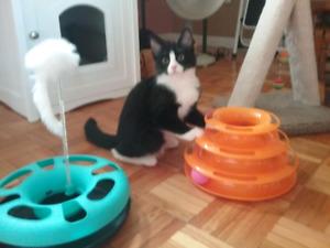 Pension familiale pour chat, transport disponible