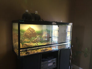 Bearded Dragon with Huge Tank and Accessories $400 OBO