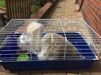 Rabbit Cage (with extras)