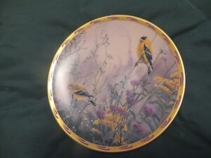 collector plate
