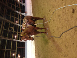 Nice youth trail mare and a ranch gelding