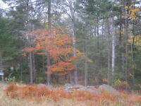 Selling 1 acre lot