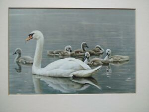 """""""Royal Family Mute Swans& """"Edge of the woods"""" by Robert Bateman"""