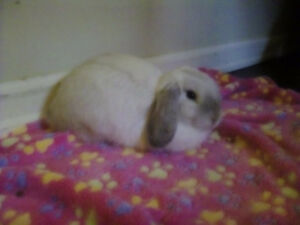 Free Mini HL Bunny (Barriere)