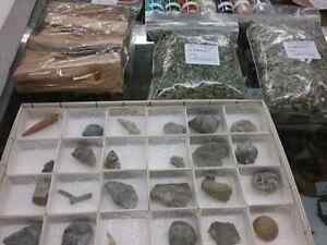 Fossils, minerals, shells, plus 600 booths to explore