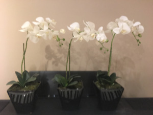 Beautiful Orchid accent pieces