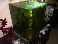 Full setup Fluval Flora fish tank with everything