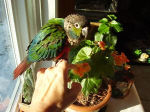 Garderie familiale pour oiseaux
