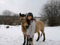 March Break Camp and PA Day Camps for Horse Lovers!