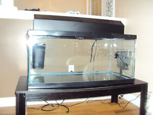 50 gal tank for aquatic turtle c/w two filters