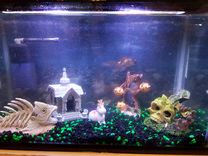 15 gal fish tank with accessories