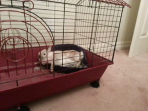 Large Bunny/Rabbit Cage