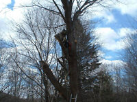 Red Arbour - Tree Service