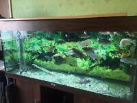 Fish tank & Malawi